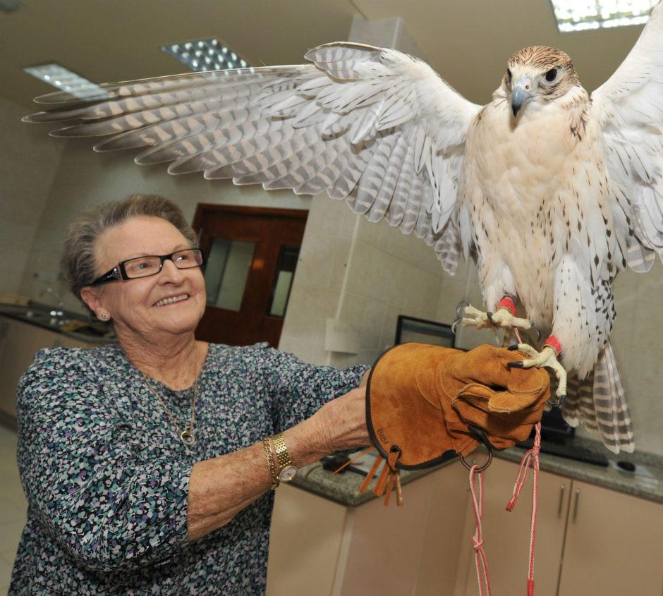 Bệnh viện chim ưng Abu Dhabi
