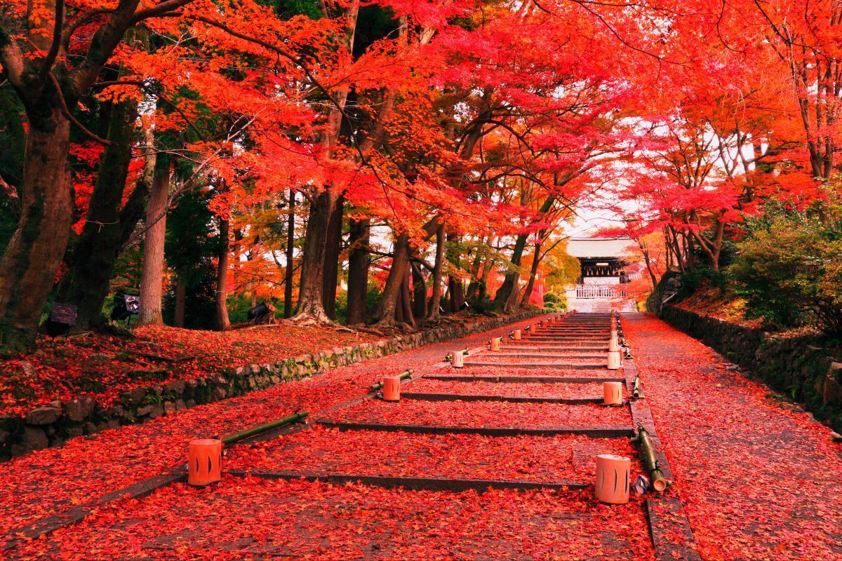 Thông tin về chương trình du học Nhật Bản tự túc